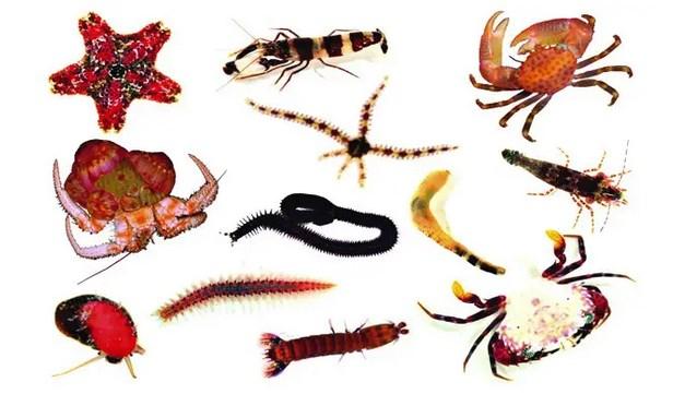 Pengertian-Arthropoda,-Ciri,-Klasifikasi,-Ukuran,-Struktur,-Reproduksi-&-Peranan